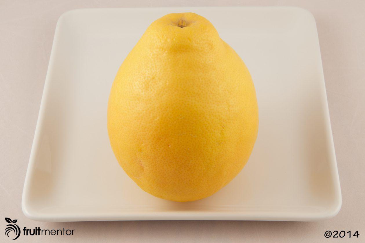 pomelo-grapefruit