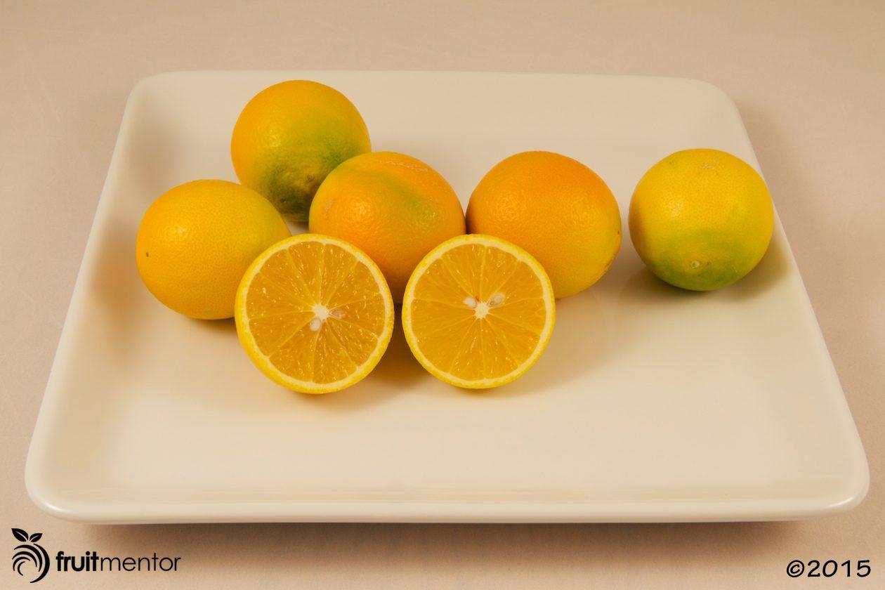 Akçay Sekeri Sweet Orange (also known as Crescent Orange and Aksay Sekerlisi)