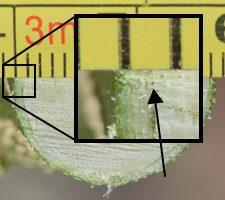 Phần tượng tầng thể hiện bằng mũi tên