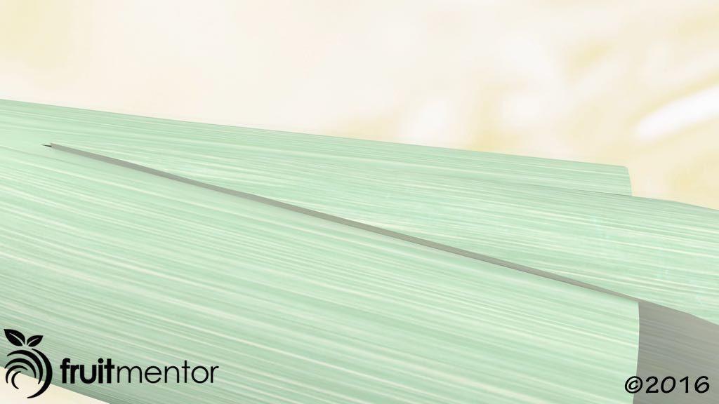 劈接法中树皮对齐但是形成层未对齐的图示。