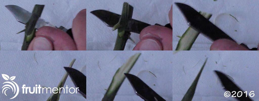 切削接穗。