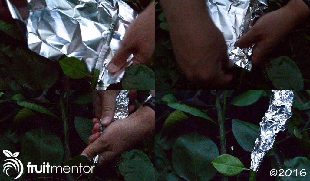 Bao mối ghép bằng giấy nhôm mỏng để bảo vệ khỏi ánh sáng mặt trời