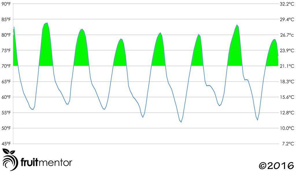 Pronóstico de Temperatura Semanal Favorable para Injertar Cítricos