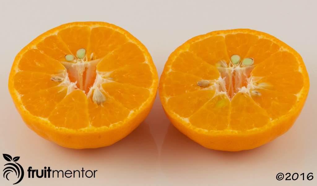 Avana Tardivo Mandarin Orange