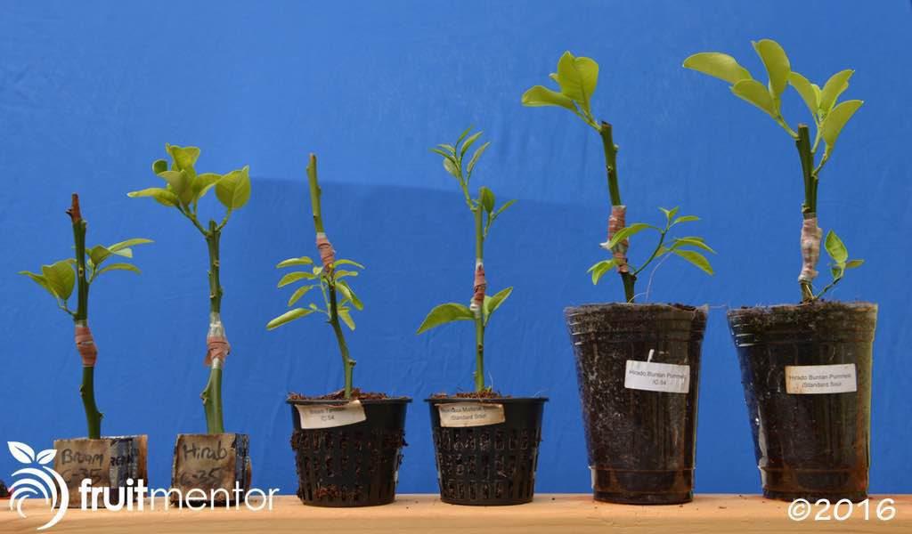 Những cây đầu tiên đã ra rễ trong lô thứ hai