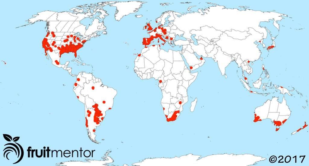 Sự lan rộng toàn cầu của đàn kiến Argentina.