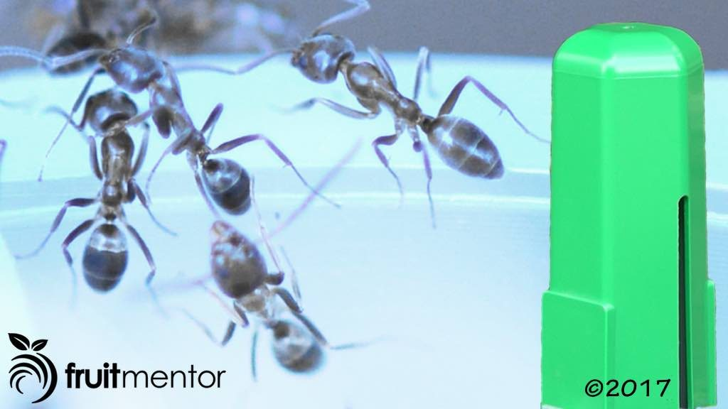 Natural Repellent Oil For Fire Ants