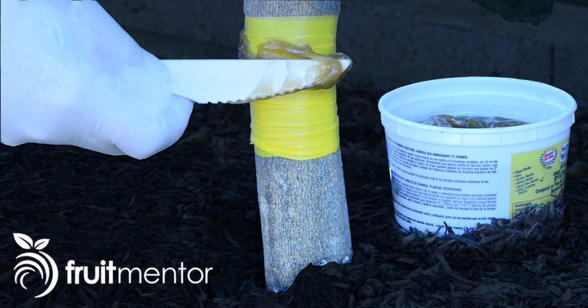 C mo eliminar hormigas y plagas en rboles c tricos con for Como eliminar plaga de hormigas