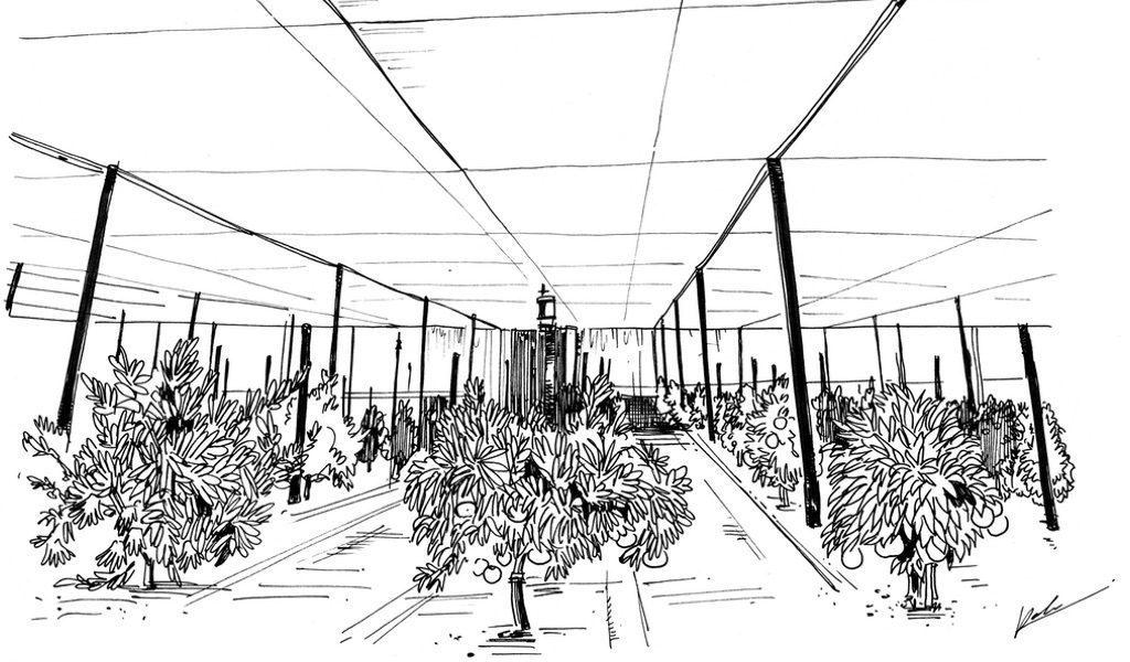 UC 리버사이드 감귤류 품종 컬렉션은 감귤류 보호를 위한 구조물을 만들기 위한 기금을 모으고 있습니다.