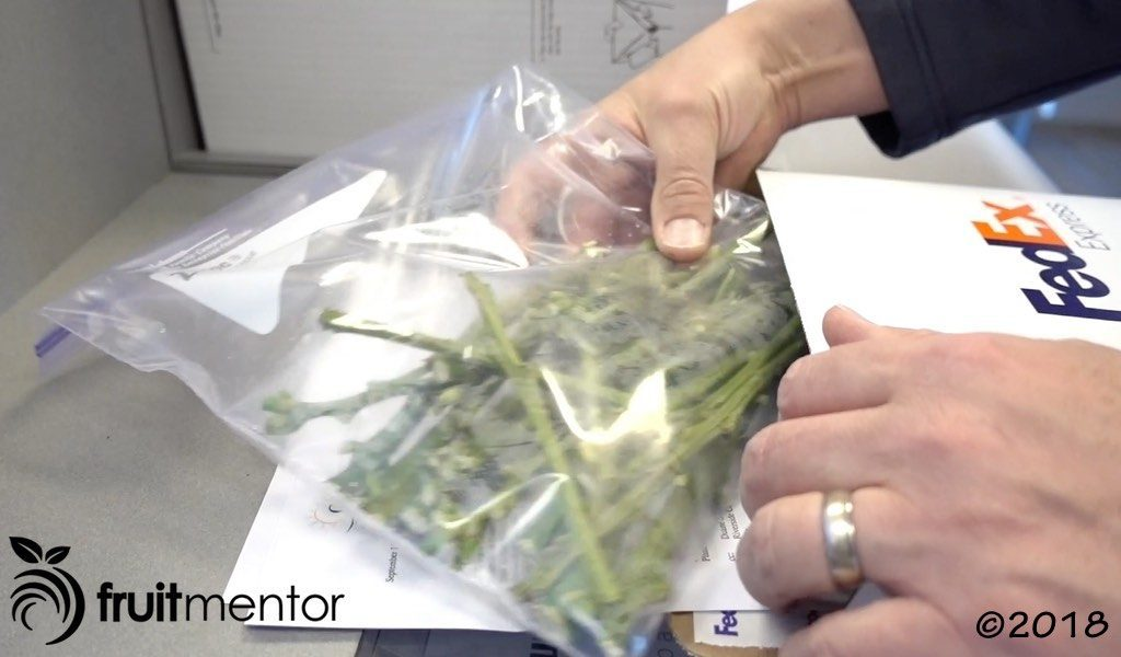 Shipping the cuttings via an express courier service.