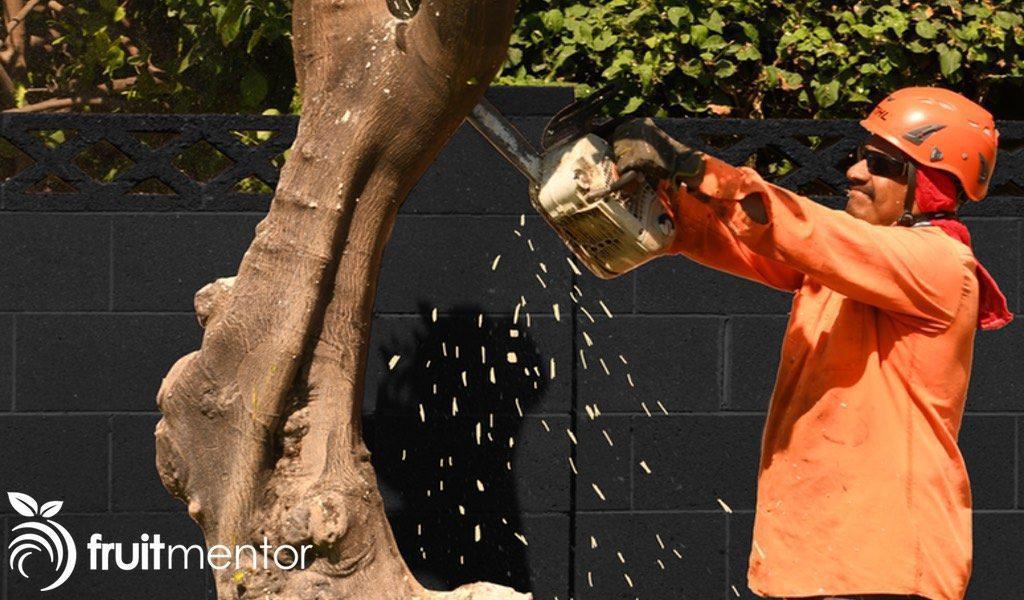 Es posible salvar a los árboles cítricos de la enfermedad huanglongbing (HLB) eliminando y destruyendo los árboles no deseados.